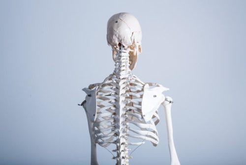美姿勢で老けない体へ 骨格標本